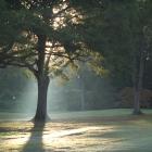아침에 만나는 가을 빛 by 서마사
